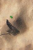 La sombra de la planta en la playa amarilla de la arena Fotos de archivo