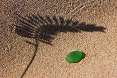 La sombra de la planta en la playa amarilla de la arena y el vidrio verde para Foto de archivo libre de regalías