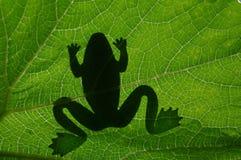 La sombra de la rana Fotos de archivo