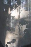 La sombra de las flores en la cortina Imagen de archivo