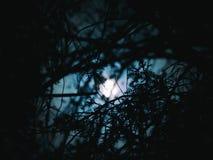 La sombra de las lunas Imágenes de archivo libres de regalías