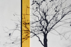 La sombra de un árbol foto de archivo