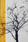 La sombra de un árbol fotografía de archivo libre de regalías