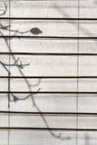La sombra de un salvaje se levantó a través de la pantalla del Shoji Fotos de archivo libres de regalías