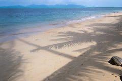 La sombra de una palmera en la arena Imagen de archivo