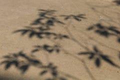 La sombra del árbol Foto de archivo libre de regalías