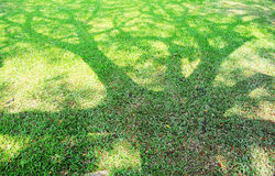 La sombra del árbol en un césped verde. Fotografía de archivo