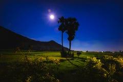 La sombra del árbol es larga debajo de la luna en el campo fotografía de archivo