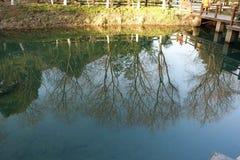 La sombra del árbol está en el río imagen de archivo libre de regalías