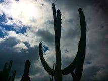 La sombra del cactus Imagen de archivo libre de regalías