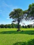 La sombra excelente proporcionó por un árbol en un campo verde hermoso imagen de archivo libre de regalías