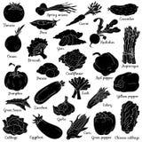 La sombra fijó con las verduras, etiquetas engomadas de la historieta del vector Foto de archivo libre de regalías