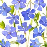 La sorgente blu fiorisce la priorità bassa fotografia stock