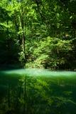 La sorgente del fiume Kupa in foresta Fotografia Stock