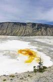 La sorgente di acqua calda di Yellowstone Mammonth Fotografie Stock Libere da Diritti