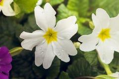 La sorgente fiorisce al sole Immagine Stock Libera da Diritti
