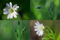 La sorgente fiorisce il collage Fotografie Stock Libere da Diritti