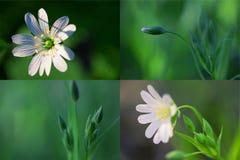 La sorgente fiorisce il collage Immagini Stock