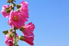 La sorgente fiorisce il fiore fotografie stock