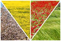 La sorgente fiorisce il fiore fotografia stock libera da diritti
