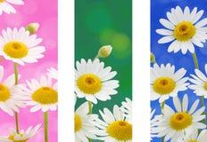 La sorgente fiorisce le bandiere Fotografia Stock