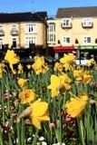 La sorgente fiorisce in un giorno soleggiato, contro le costruzioni ed il cielo blu fotografia stock libera da diritti