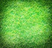 La sorgente fresca geen l'erba Fotografie Stock Libere da Diritti