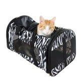 La sorpresa del gatto sbircia il trasportatore morbido parteggiato isolato sul backgro bianco immagine stock