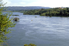 La source de Nile River blanche en Ouganda images libres de droits