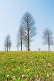La source viendra. arbres chauves et peu image stock
