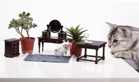 La souris se cache à la maison du chat Images libres de droits