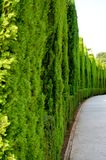 La Spagna Granada Alhambra Generalife (6) immagine stock