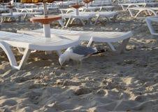 la spiaggia con un gabbiano Fotografia Stock Libera da Diritti