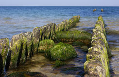 La spiaggia del Mar Baltico Immagine Stock Libera da Diritti