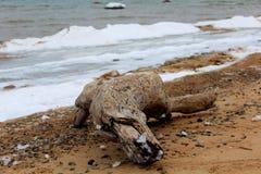 La spiaggia del Mar Baltico Fotografia Stock