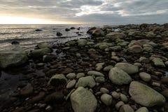 La spiaggia di Boulder durante il tramonto nuvoloso con alga verde ha coperto 13 aprile 2019 le rocce - Veczemju Klintis, Lettoni fotografia stock