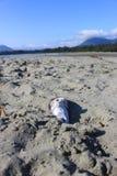 La spiaggia di Chesterman, Tofino, BC Fotografia Stock