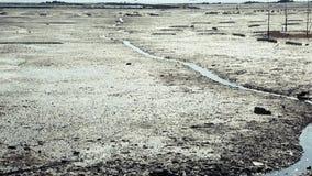 La spiaggia dopo il riflusso video d archivio