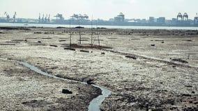 La spiaggia dopo il riflusso stock footage