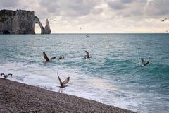 La spiaggia e le scogliere con i gabbiani di Etretat, Normandia sulla costa francese Fotografia Stock
