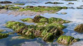 La spiaggia a primavera Immagini Stock