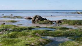 La spiaggia a primavera Fotografie Stock Libere da Diritti