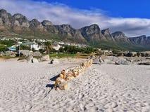 La spiaggia si accampa baia, Cape Town, Sudafrica Immagine Stock