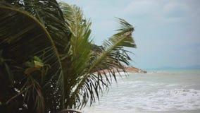 La spiaggia tropicale con le palme d'ondeggiamento pesanti in una tempesta davanti ad un mare delirante ed i cambiamenti mettono  video d archivio