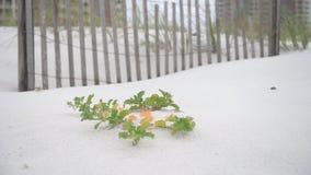 La spiaggia vuota con il recinto e fiore verde e le foglie su Pensacola tirano, Florida video d archivio
