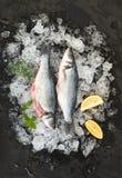 La spigola cruda con il limone ed i rosmarini sullo scheggiato su ghiacciano il contesto di pietra scuro immagini stock libere da diritti