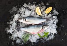 La spigola cruda con il limone ed i rosmarini sullo scheggiato su ghiacciano il contesto di pietra scuro immagine stock
