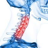 La spina dorsale cervicale illustrazione vettoriale