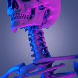La spina dorsale cervicale illustrazione di stock