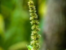 La spina dorsale unica gradisce il fiore fotografia stock libera da diritti